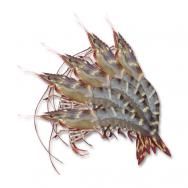 Organic tiger prawn size 31-35 (1kg)