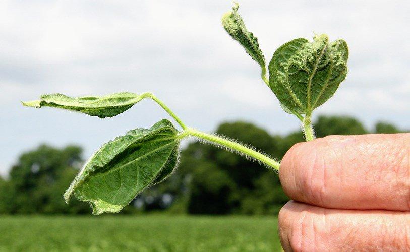 VÒNG LUẨN QUẨN CỦA GMO - THUỐC TRỪ CỎ