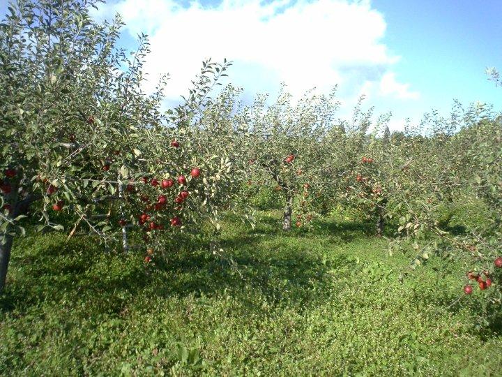 Cỏ dại là một phần không thể thiếu của nông nghiệp không hóa chất