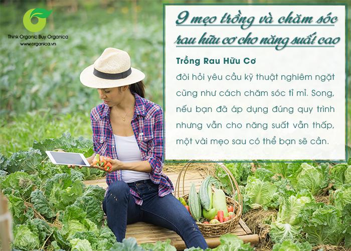 9 mẹo phải biết nếu muốn trồng rau hữu cơ cho năng suất cao