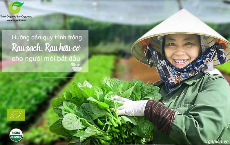 Hướng dẫn quy trình trồng rau sạch, hữu cơ cho người mới bắt đầu